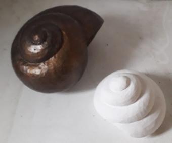 shells in plaster